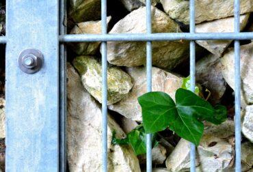gabioane piatra pentru garduri